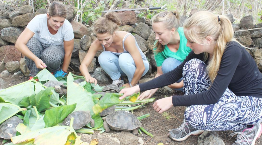 エクアドルでガラパゴスゾウガメの赤ちゃんへのエサやりにあたる高校生ボランティア